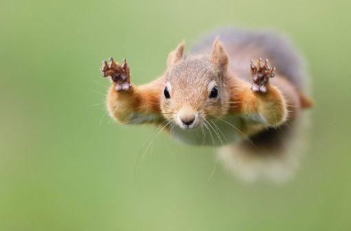 Wie Eichhörnchen springen – ohne zu fallen