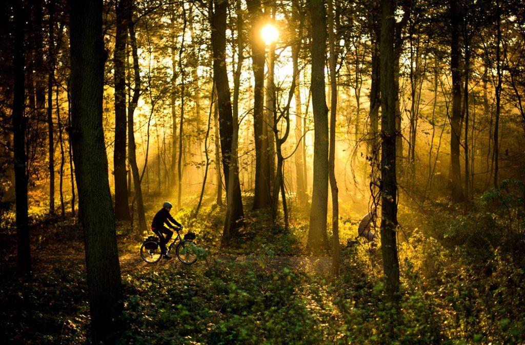 Rücksichtnahme gefordert: Mountainbiker im Stadtwald Foto: dpa/ Julian Strate