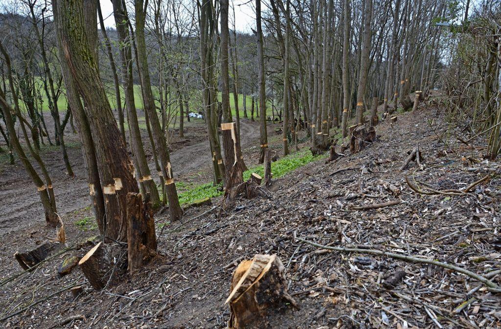 Der Bezirksbeirat Mühlhausen  kritisiert die Abholzaktion in den Auwiesen. Foto: Janey Schumacher