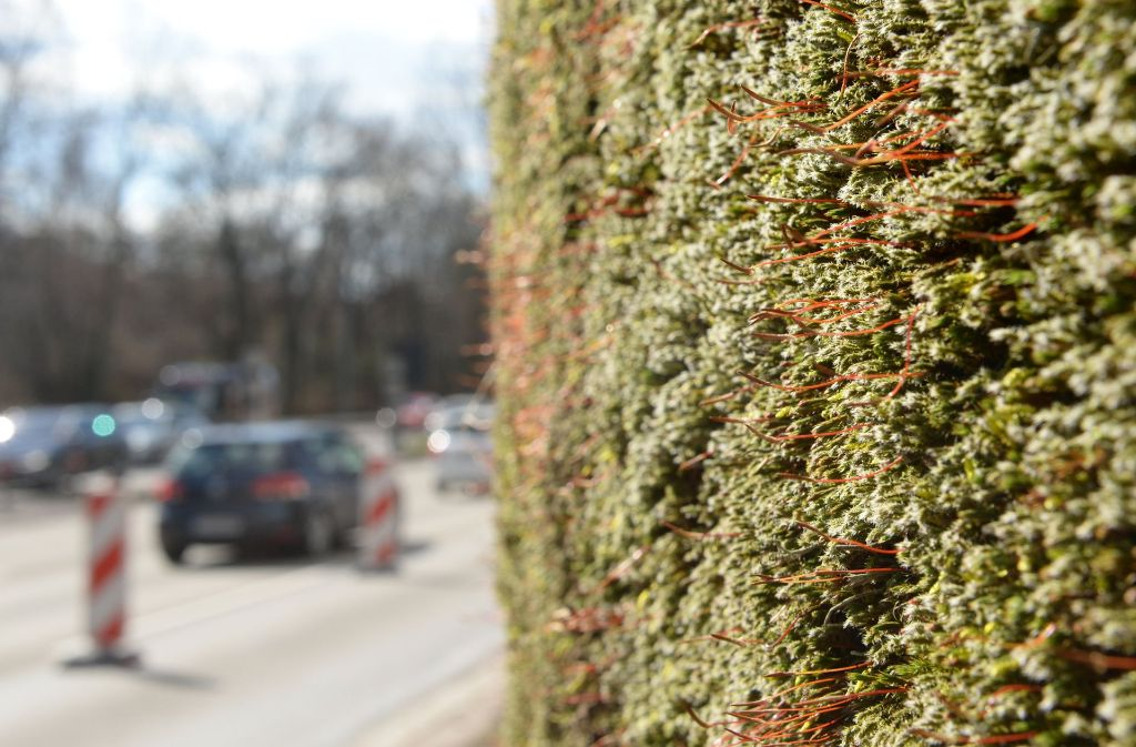 Eine Mooswand in Stuttgart soll die Schadstoffe binden Foto: dpa
