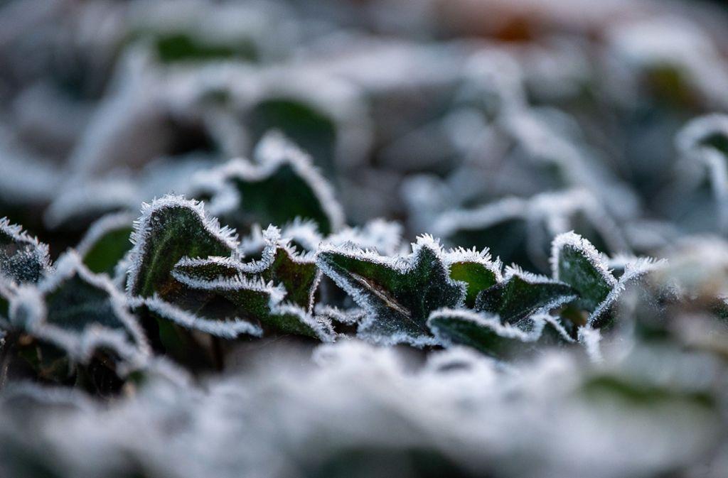 Nachts kann es im Südwesten schon richtig frostig werden. Foto: dpa/Sebastian Gollnow