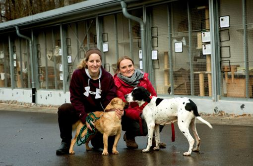 Tierheimstreit: Die Wogen   sind geglättet