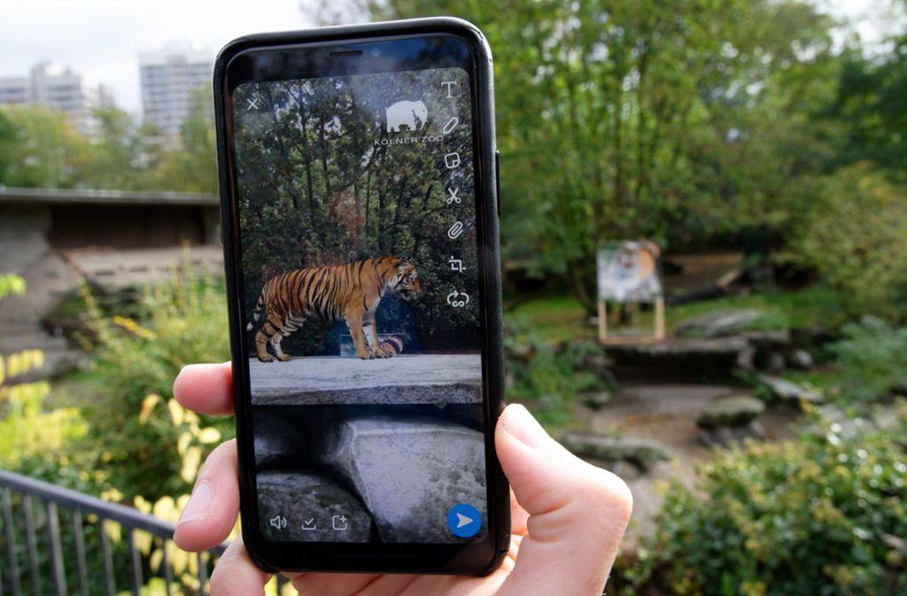 Der Tiger ist nur auf dem Handy zu sehen. Foto: dpa/Henning Kaiser