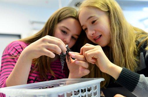 Im künftigen NWT-Unterricht wird es um mehr gehen als um die Frage, warum Nägel an einem Magneten hängen. Foto: Norbert J. Leven