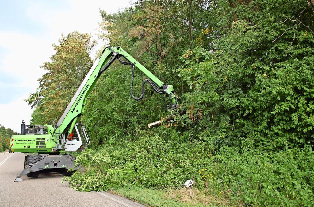 Der Bagger mit Säge- und Erntekopf kürzt Bäume, die auf die Straße ragen. Foto: Kuhn
