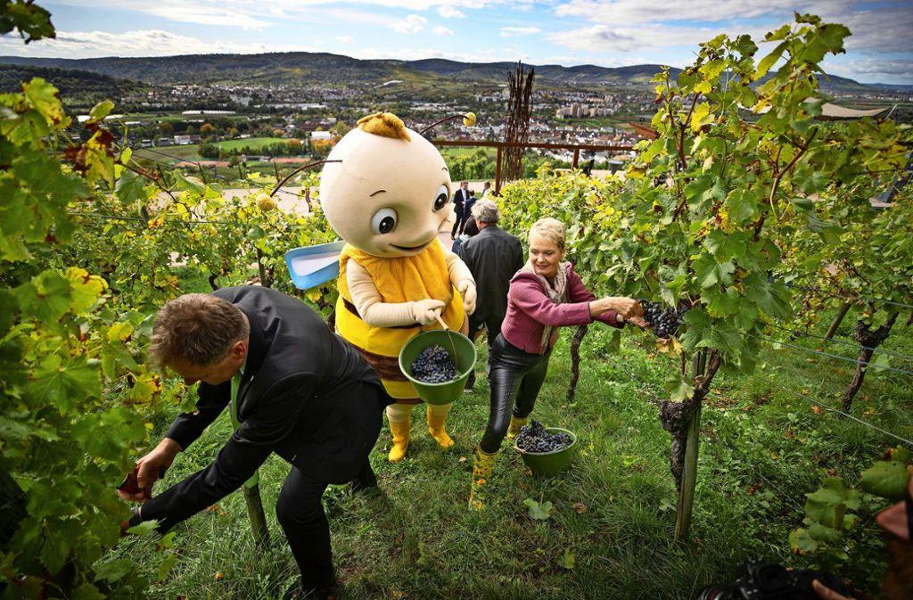 Zum formalen Abschluss der Remstal-Gartenschau hilft auch das Maskottchen Remsi bei der Weinlese. Foto: Gottfried Stoppel