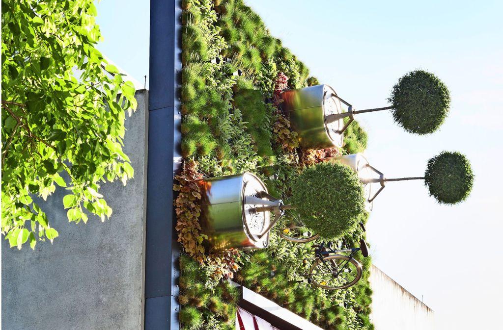 Das Start-up Visioverdis möchte Städte innovativ begrünen. Foto: Uni Hohenheim/S. Dauphin