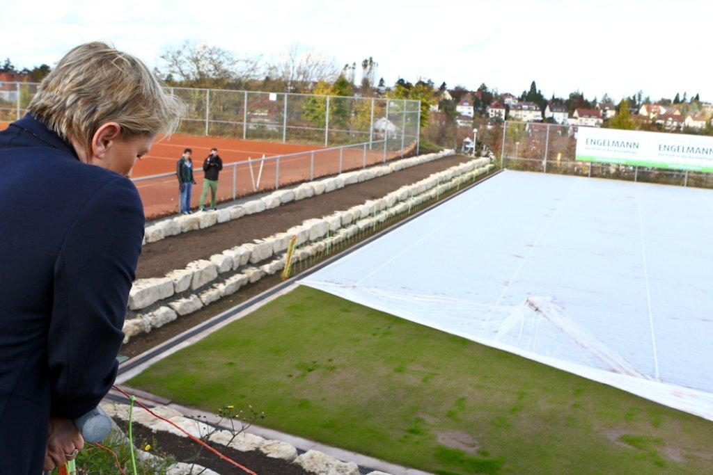 Der Mercedes-Cup in Stuttgart wird von 2015 an als ATP-Rasenturnier ausgetragen. Aus diesem Grund werden die Tennisplätze des TC Weissenhof umgebaut. Die sprießenden Grashalme gibt es in der Fotostrecke zu sehen. Foto: Benjamin Beytekin