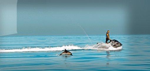 Krach im Ozean bedroht Tierarten