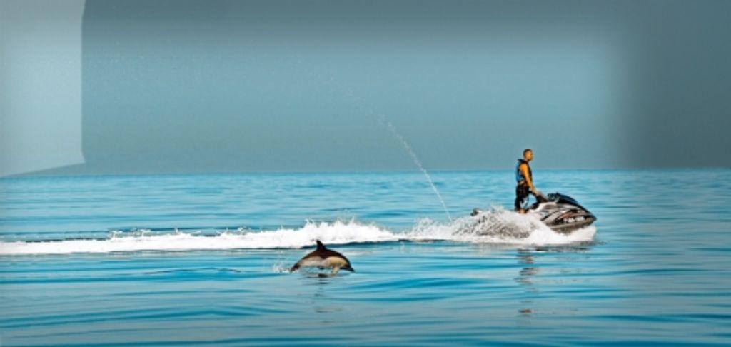 Für einige Meeresbewohner wie Delfine istder Lärm eine ernste Bedrohung. Foto: picture alliance