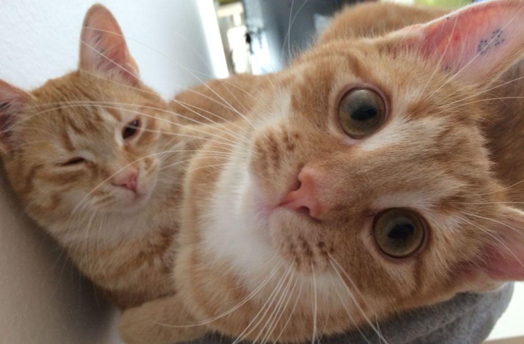 Simba (rechts) mit seinem Bruder Shirkan. Foto: privat