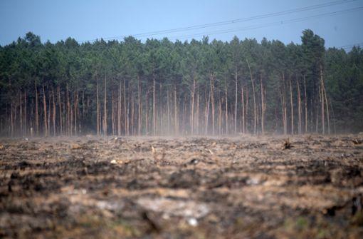 Deutschlands Bäume im Hitzestress