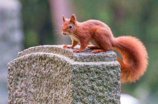 Eichhörnchen aus Lichtschacht befreit