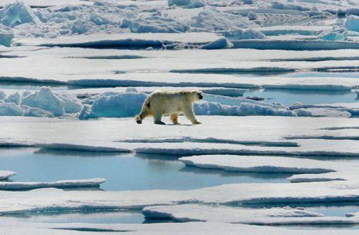 Eisbären geht  es schlechter