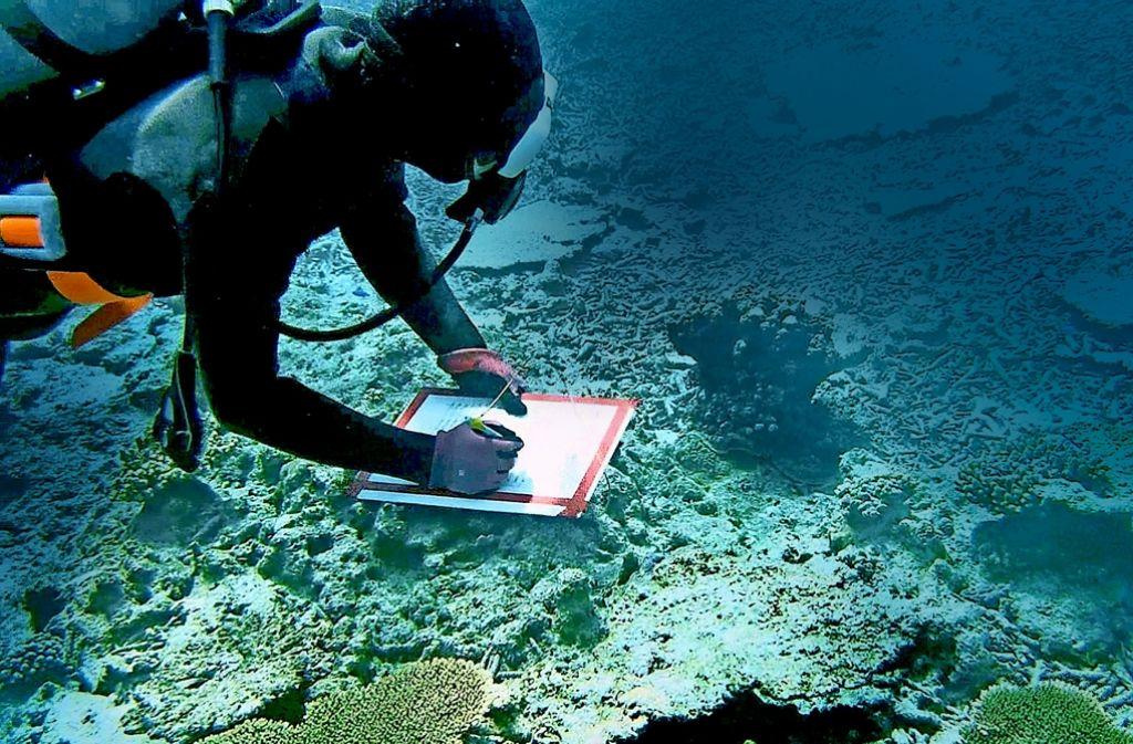 Ein Taucher kontrolliert das Korallenwachstum. Foto: ZDF