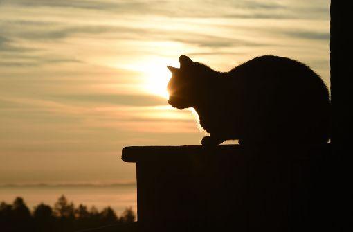 Geköpfte Katze am Bahnhof gefunden