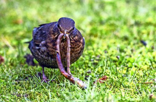 So machen Würmer den  Boden fruchtbar