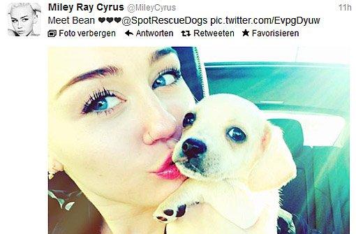 Miley Cyrus tröstet sich mit einem neuem Hund