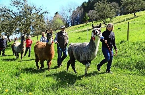 Mit  Lamas auf Entschleunigung