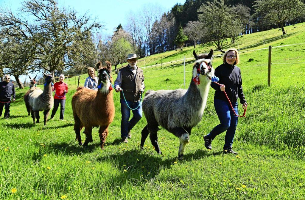 Gassigehen geht auch mit Lamas, zum Beispiel im Schwarzwald. Foto: Recken