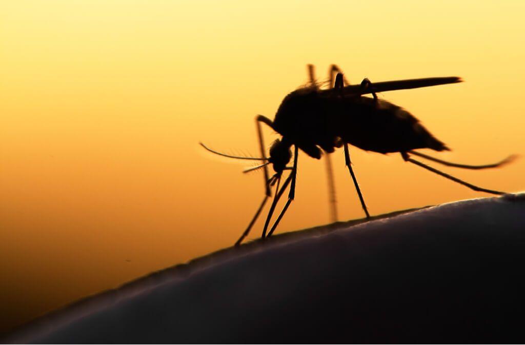 Erfahren Sie, was Mücken und Schnaken tagsüber machen und wo sich Stechmücken im Zimmer verstecken. Foto: Mycteria / Shutterstock.com