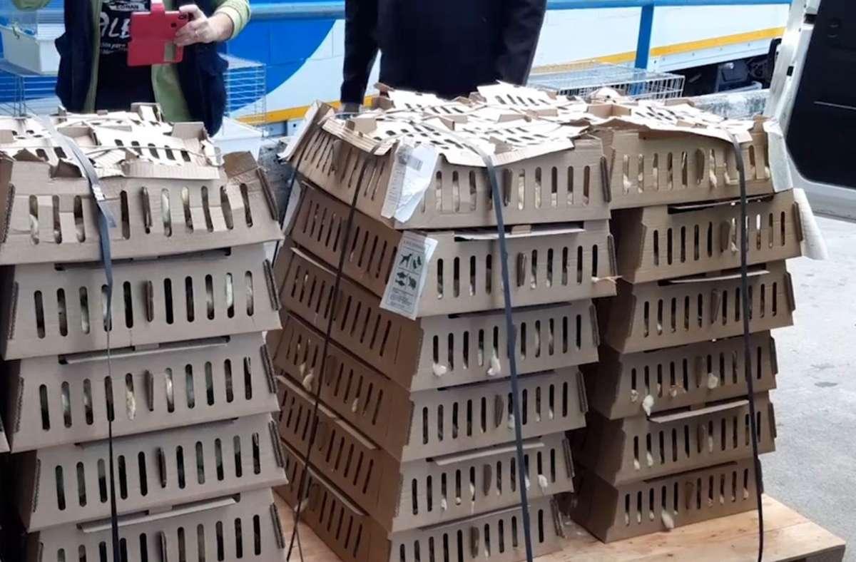 Die Küken waren drei Tage lang ohne Nahrung und Wasser in diesen Kisten. Foto: dpa/---