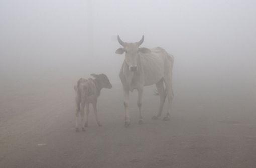 Sicherheitskräfte müssen Kuh von Flughafen vertreiben