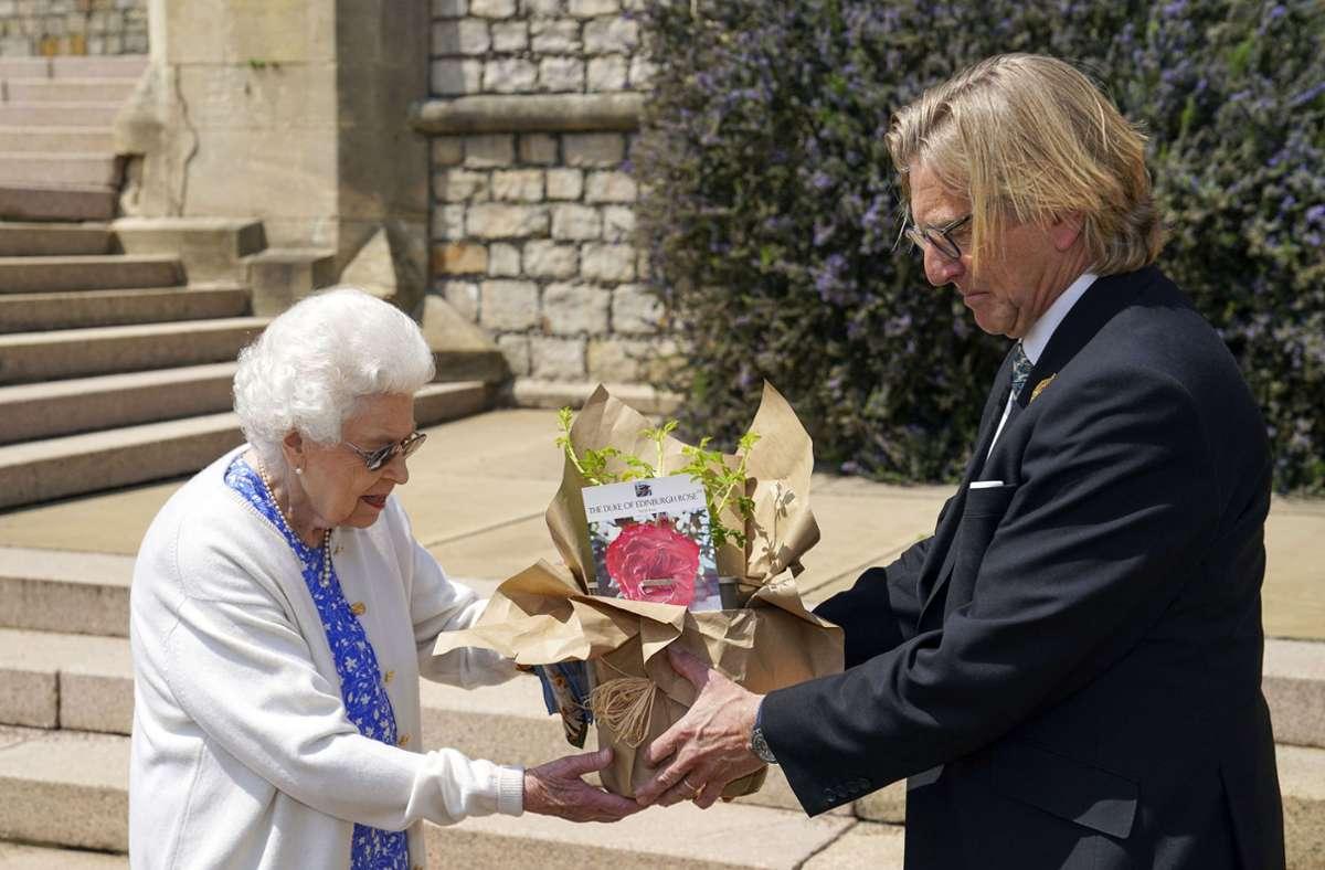 """Eine Rose zu Ehren von Prinz Philip: Die Queen mit der """"Duke of Edinburgh""""-Züchtung. Foto: AFP/STEVE PARSONS"""