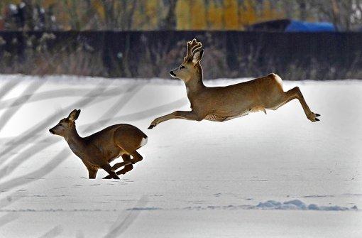 Jäger und Naturschützer – beide wollen für das Wild zuständig sein. Foto: dpa