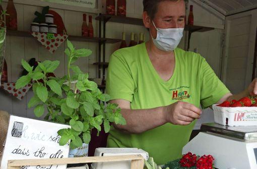 Unterkühlter Saisonauftakt für Erdbeeren