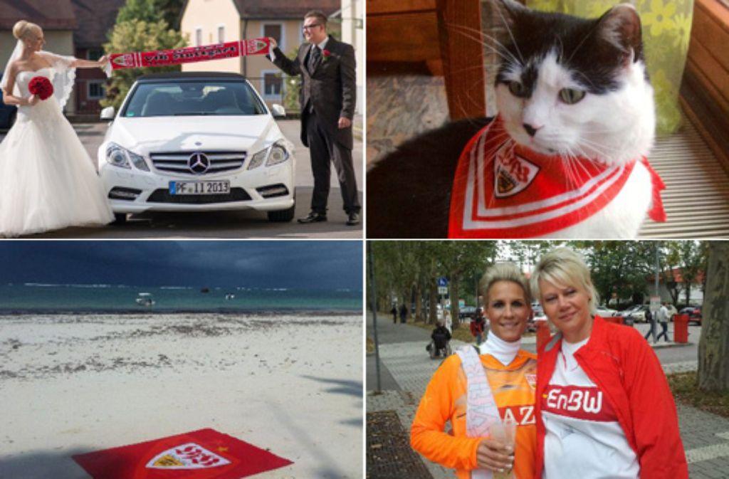 Eine Katze mit VfB-Halstuch, das Wappen am Strand von Kenia oder ein Schal auf dem Hochzeitsfoto - solche wunderbaren Bilder bekommen wir von unseren Lesern geschickt. Klicken Sie sich durch die große Bildergalerie! Foto: SIR/Montage