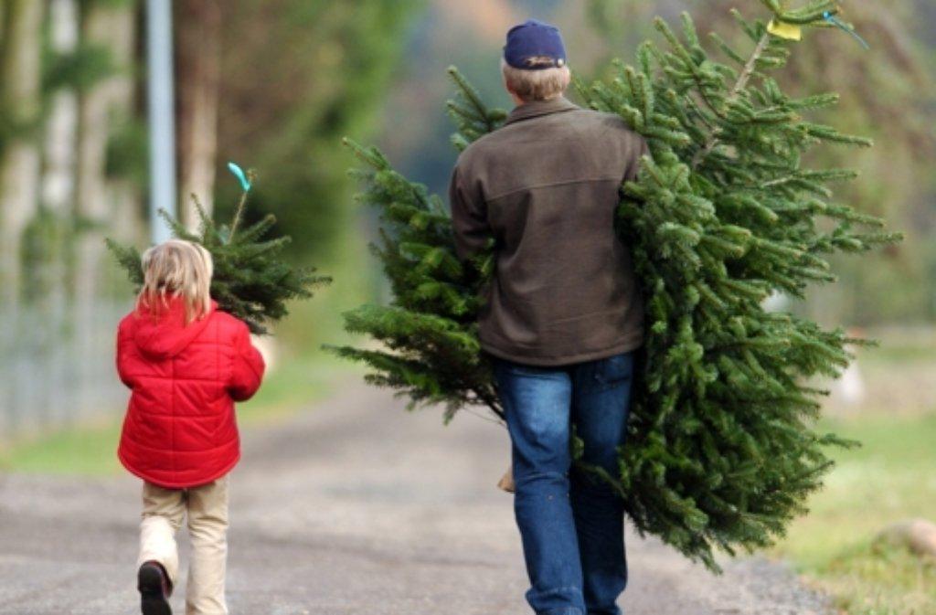 Am 9. Januar sind ehrenamtliche Helfer mit Traktor und Transportwagen unterwegs, um die Weihnachtsbäume abzuholen. Foto: dpa