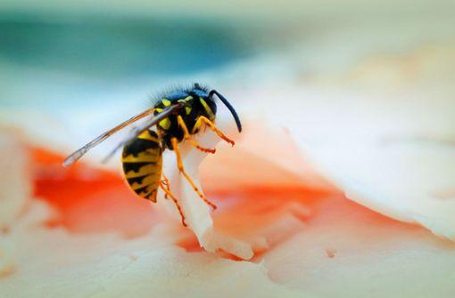 Wie gefährlich sind Wespen oder Motten am Essen?