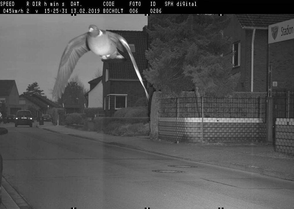 In den Blitzer geflattert: In Bocholt flog im Februar 2019 eine Taube in eine Radarfalle - sie war mit 45 Km/h in einer 30er-Zone unterwegs. Foto: Stadt Bocholt