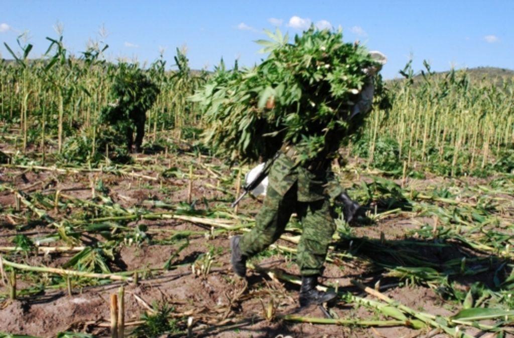Da kann die mexikanische Polizei noch so viele Marihuana-Plantagen zerstören: Die  Drogenkriminalität beherrscht das ganze Land. Foto: dpa