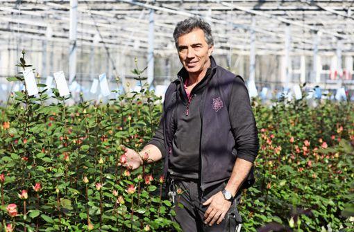 Lieber Rosen aus Fellbach als Tulpen aus Peru