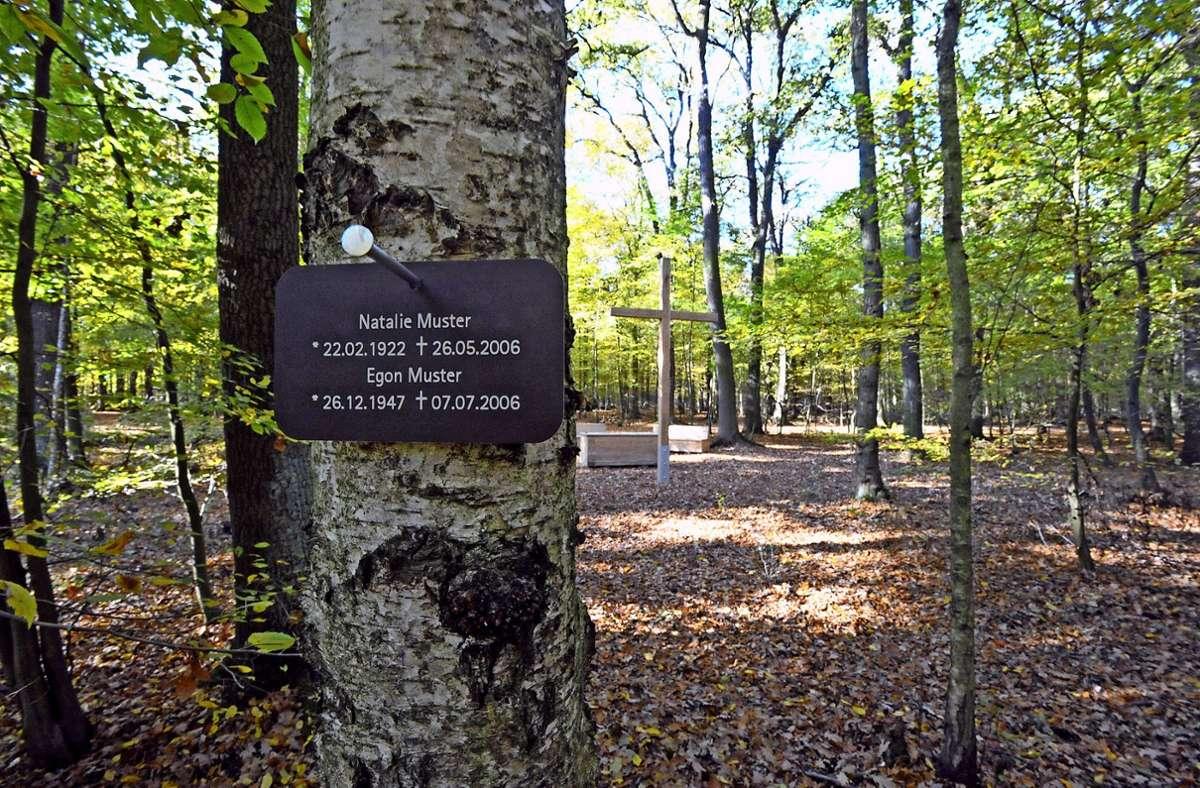 Gibt es in Filderstadt in Zukunft einen Bestattungswald? Das Foto zeigt einen Friedwald in Dessau-Roßlau in Sachsen-Anhalt. Foto: dpa/Peter Endig