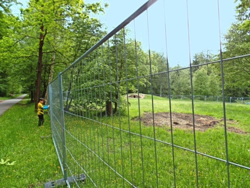 Die Bäume am  Spielplatz  werden auf  ihre Standfestigkeit hin untersucht. Foto: Kathrin Wesely