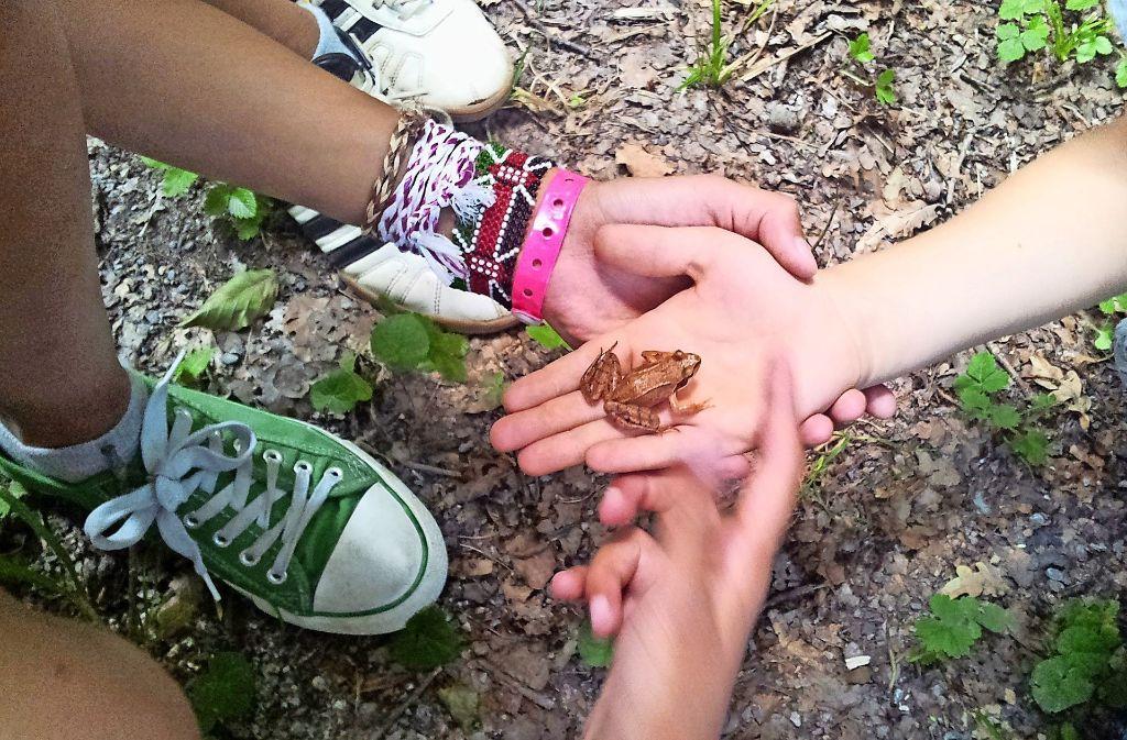 Bei  Erkundungstouren im Wald und auf dem Killesberg gab es für die Kinder Natur zum Anfassen. Foto: Stadt Korntal-Münchingen