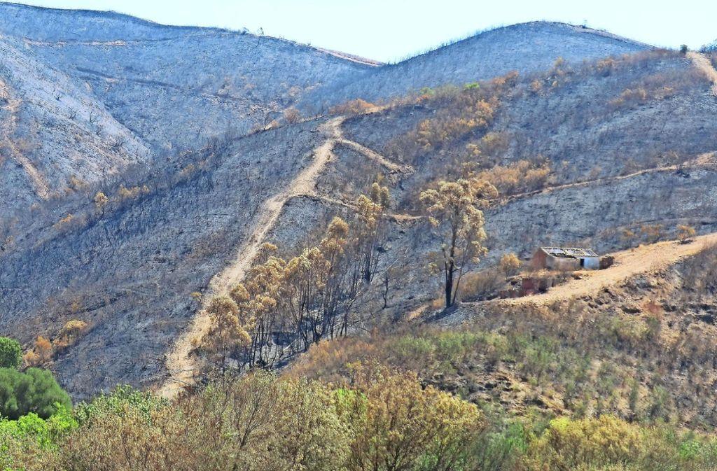 Auf dem Land von José António hat das Feuer großen Schaden angerichtet. Foto: Pois Portugal
