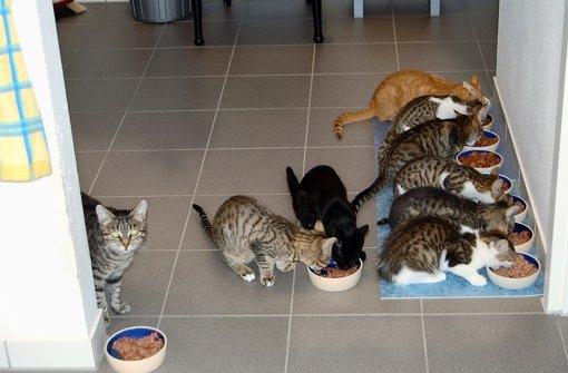 Katzenretterin aus vaihingen mit 16 katzen imtwingo for Wohnung dekorieren mit katzen