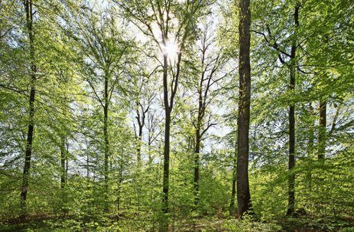 Sportholzfäller und Mini-Urwälder