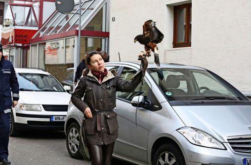 Der Taubenkrieg im Oberdorf