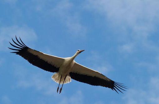 Die Online-Datenbank für den gläsernen Storch