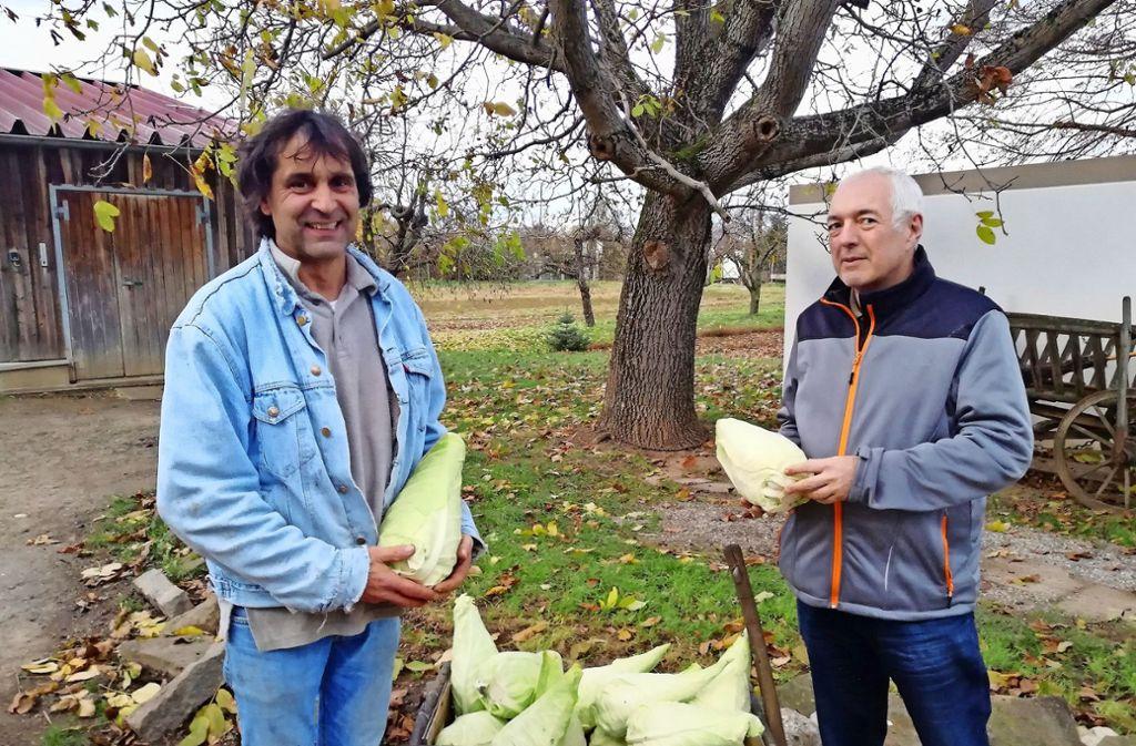 Sechs bis sieben Kilo bringen die Spitzkrautköpfe auf die Waage, berichten die Landwirte Klaus und Axel Brodbeck (v.l.). Foto: Anja Widenmann