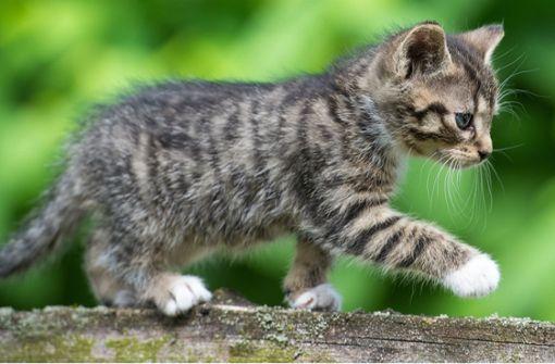 Katzen mit Luftgewehr angeschossen