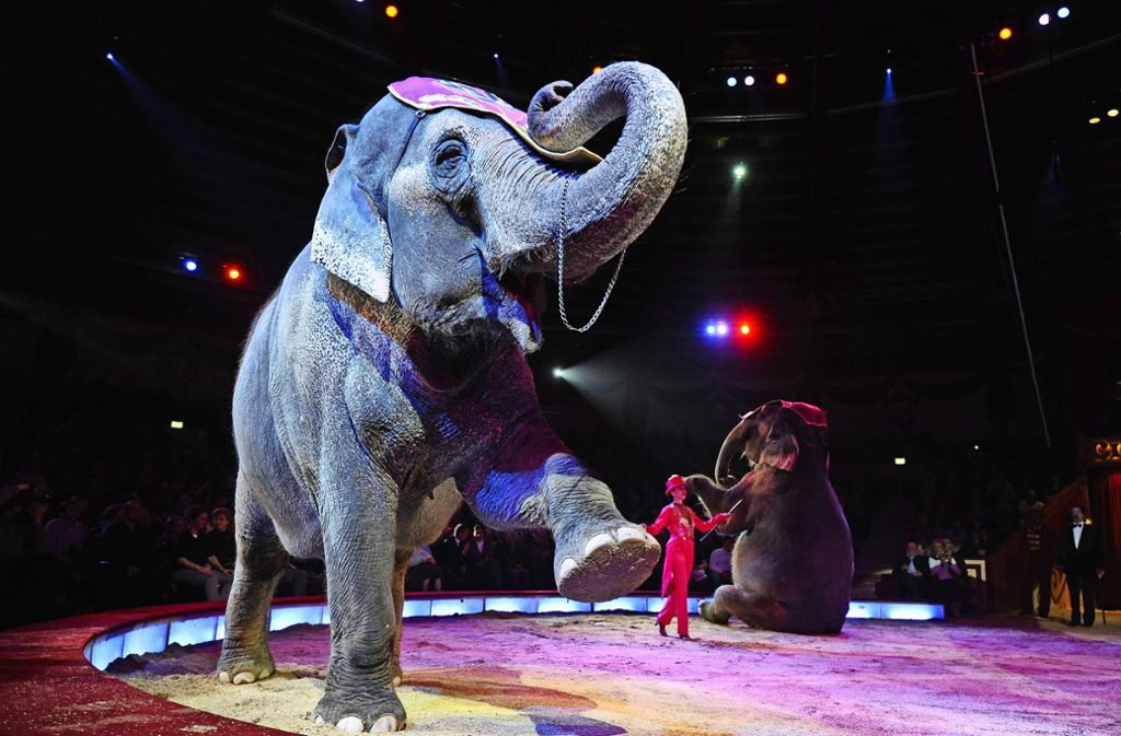 Zirkusse mit Elefanten dürfen künftig nicht mehr in Karlsruhe gastieren (Symbolbild). Foto: dpa