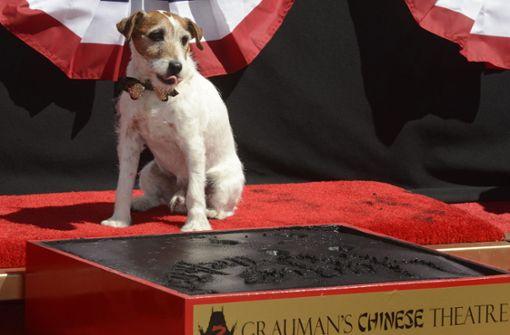 Jack Russell Terrier gewinnt Filmpreis in Cannes