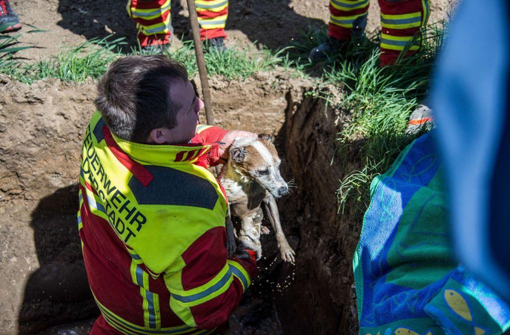 Der Hund nach seiner Rettung durch die Feuerwehr. Foto: SDMG