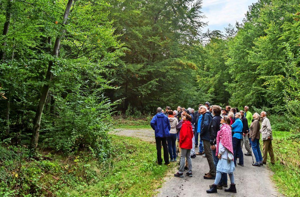Der Blick geht in die Baumkronen: Rund 30 Waldinteressierte haben am Rundgang teilgenommen und sich von Revierförster Eckard Hellstern informieren lassen. Foto: Thomas Krämer